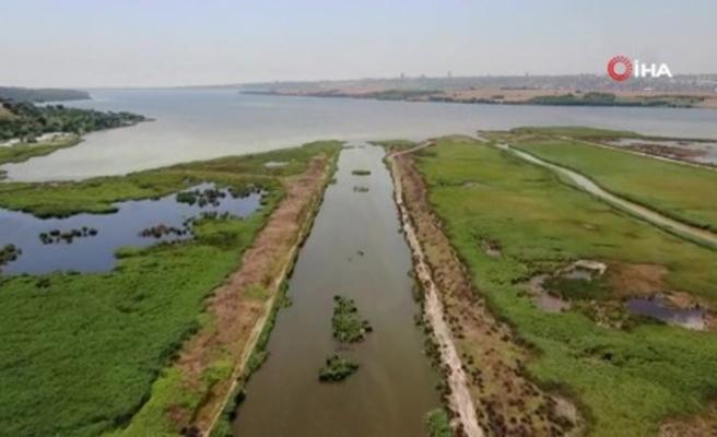 Eskiden kuş cenneti olan Küçükçekmece Gölü şimdi balık mezarı oldu