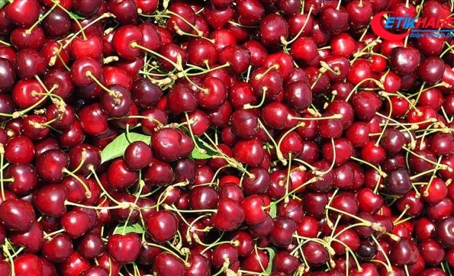 İhracata dayalı meyvelerde 'markalaşma' talebi