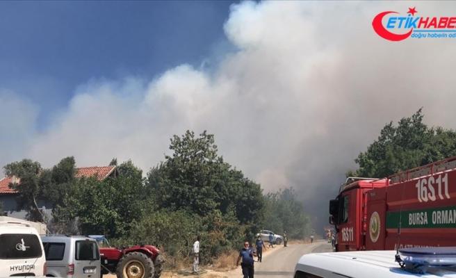 Bursa'da yerleşim bölgesi yakınında orman yangını