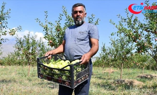 Çorak araziyi bahçeye dönüştüren esnaf tonlarca meyve yetiştiriyor