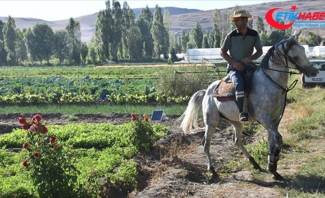 Erzurum'da devlet desteğiyle artan sebze üretimi Doğu'daki sofralara lezzet katıyor