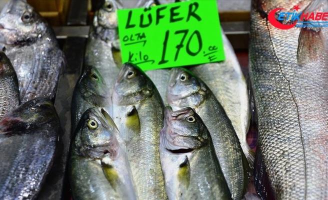 'Denizlerin prensi' lüfer kilogramı 170 liradan tezgahta