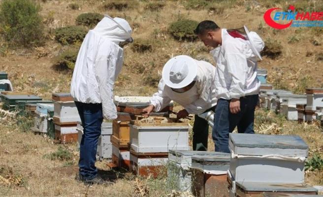 Huzura kavuşan Çemikare Yaylası'nda bal üretiyorlar