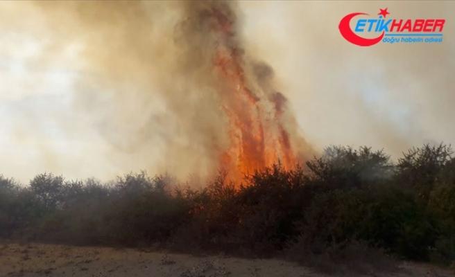 Kızılırmak Deltası Kuş Cenneti'nde yangın