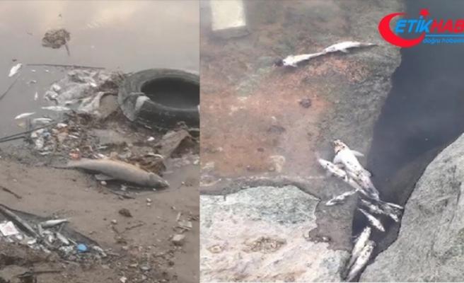 Bursa'nın Mustafakemalpaşa ilçesinde Kirmasti deresinde görülen toplu balık ölümleri vatandaşları tedirgin etti.