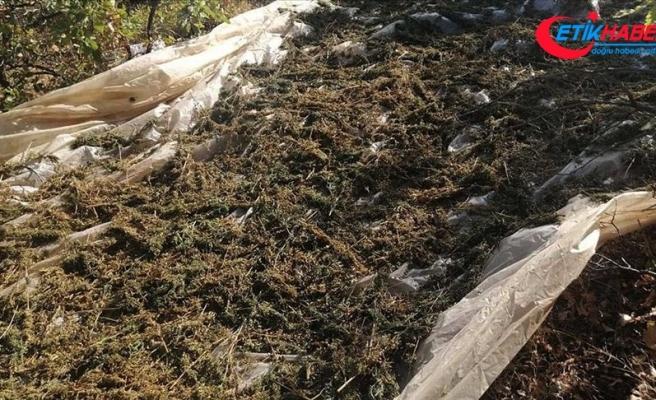 Diyarbakır'ın Lice ilçesi kırsalında 1 ton 16 kilogram esrar ele geçirildi