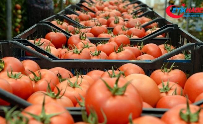 Irak'a domates ihracatı yeniden başladı
