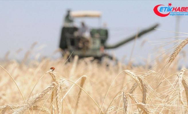Tarım Kredi çiftçilerden 9 ayda 1,6 milyar liralık ürün aldı