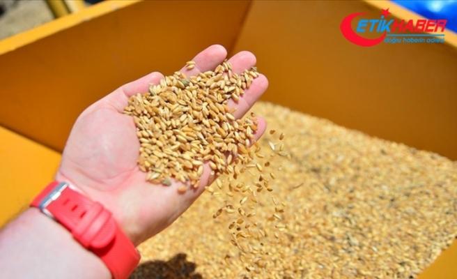 Buğday, arpa ve mısır ithalatında 30 Nisan 2021'e kadar gümrük vergisi uygulanmayacak