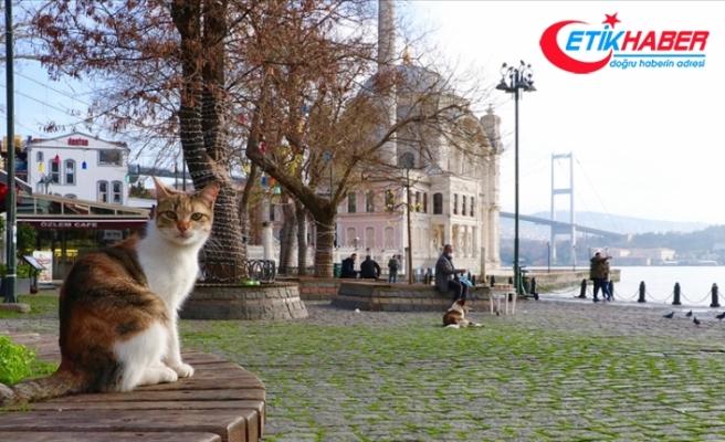 Marmara Bölgesi'nde hafta sonu sıcaklıklar mevsim normallerinin üzerinde olacak