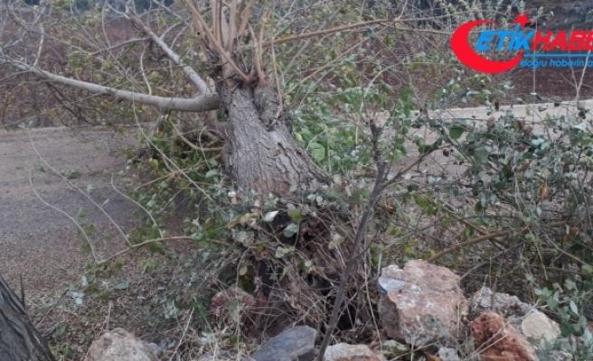 Osmaniye'de şiddetli rüzgar nedeniyle devrilen ağaçlar yolları kapattı