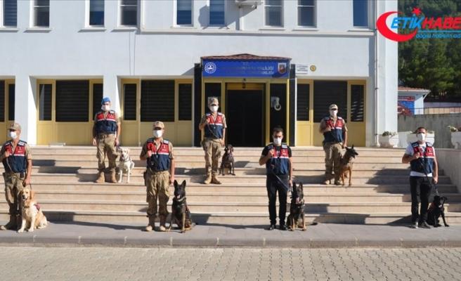 Kahramanmaraş'ta görev yapan 7 hassas burunlu köpek jandarmanın en büyük yardımcısı