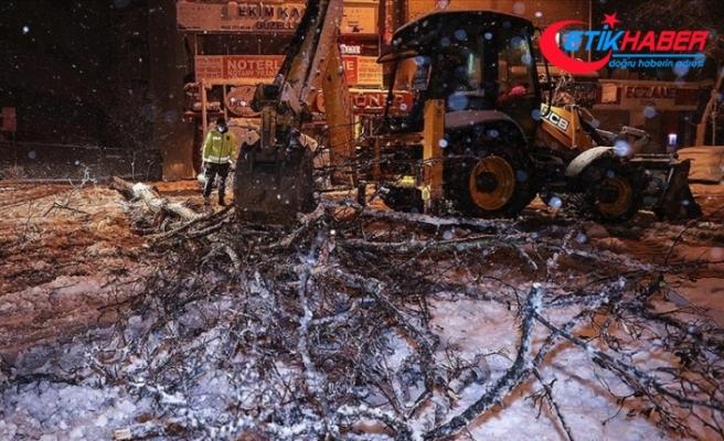 İstanbul'da kar yağışı nedeniyle bazı bölgelerde ağaçlar devrildi