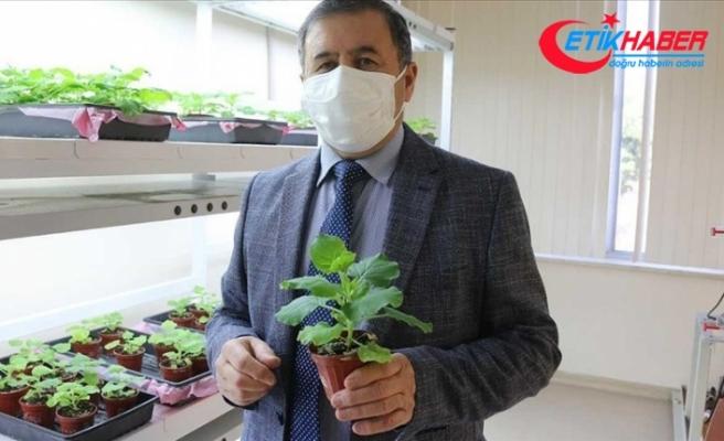 Akdeniz Üniversitesi Kovid-19'a karşı ilaç ve aşı adayı geliştirildiğini açıkladı
