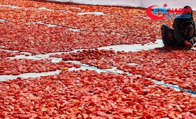 Ege ovalarında kuru domates mesaisi başladı