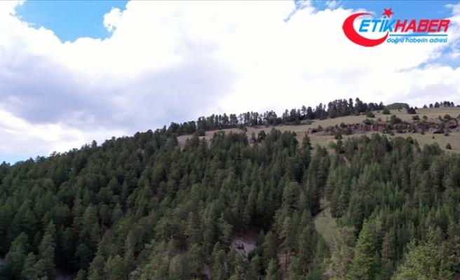 Eskişehir'de ormanlık alanlara girişlere 30 Eylül'e kadar izin verilmeyecek