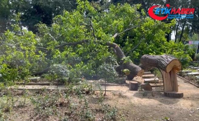 Edirnekapı Şehitliği'nde kesilen ağacın mezarların üzerine devrilmesi tepki çekti