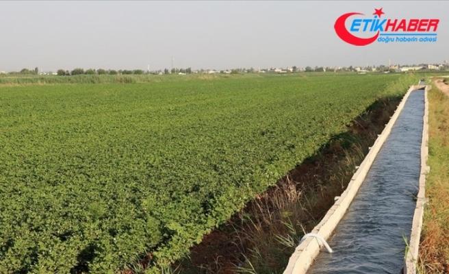 Tarımda gelecek yıl sulama ve altyapı yatırımlarına hız verilecek