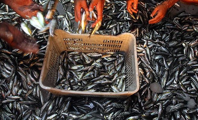 Denizlerde av yasağı yarın başlıyor