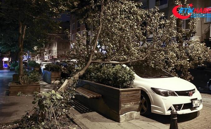 Şiddetli rüzgar ağacı devirdi