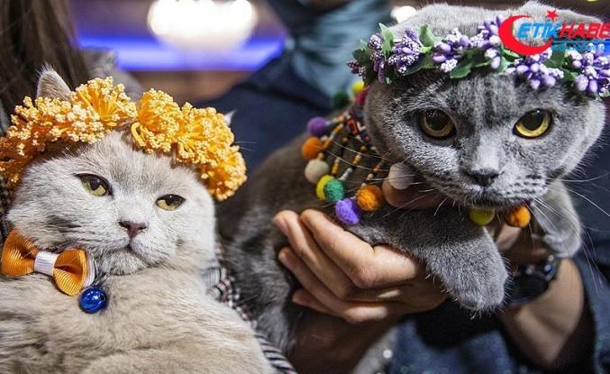 Başkentte 'Kedi Güzellik Festivali' düzenlendi