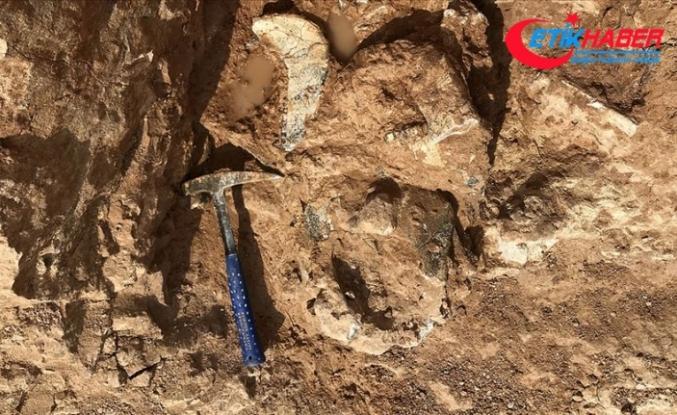 'Dünyanın en büyük papağanı'nın kalıntıları bulundu