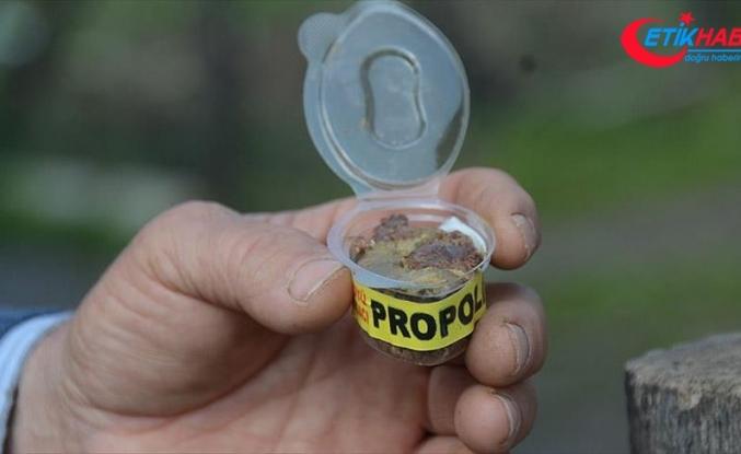 'Dünya piyasalarındaki propolisin yüzde 90'ı sahte'