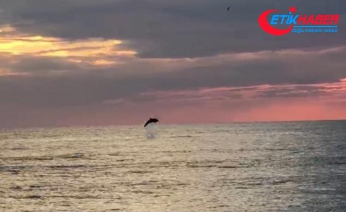 Turistlerin çekildiği sahiller yunuslara kaldı