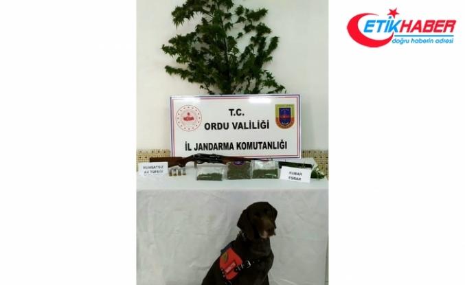Ordu'da uyuşturucu operasyonu: 2 gözaltı