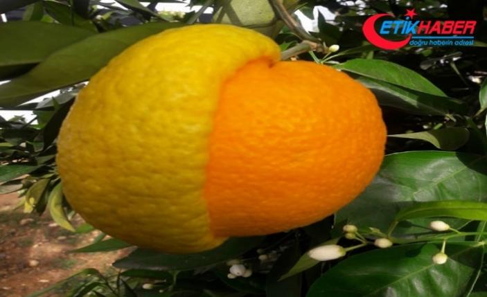 """""""Yazın aşırı portakal suyu, limonata içmek güneş lekesi yapabiliyor"""""""