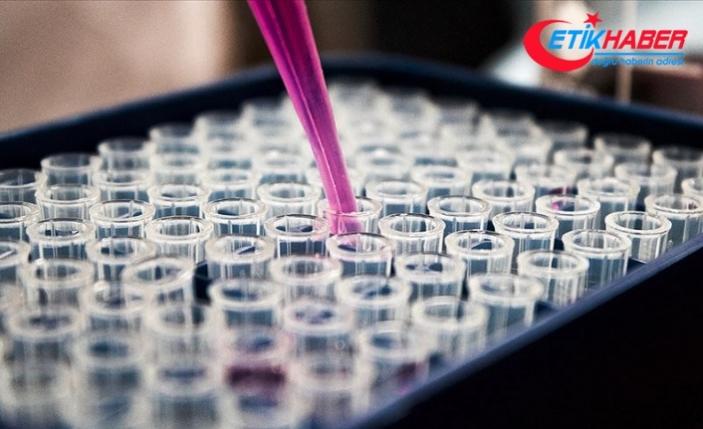 Avrupa İlaç Ajansı: Kovid-19 aşısının üretimi en az 1 yılı bulacak