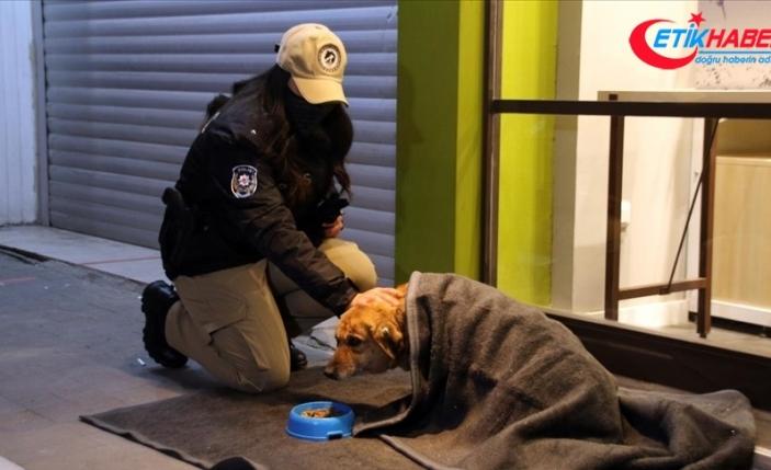 Uşak'ta polis ekipleri bazı sokak hayvanlarını battaniyeye sardı