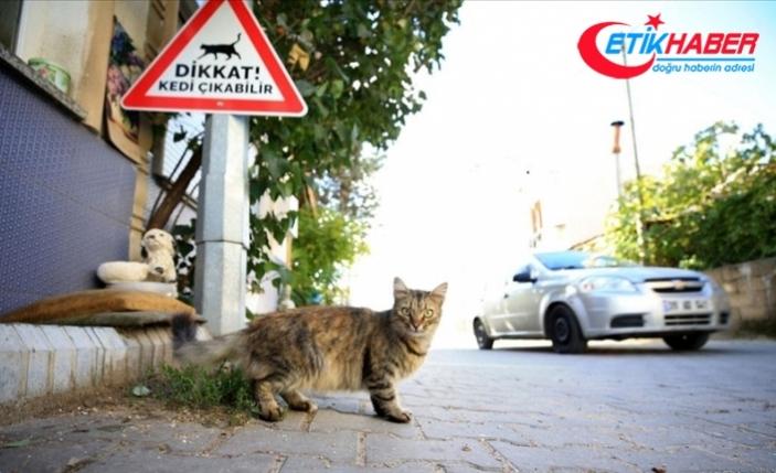 Kırklareli'nde sürücüler 'kedi - köpek çıkabilir' tabelalarıyla uyarılıyor