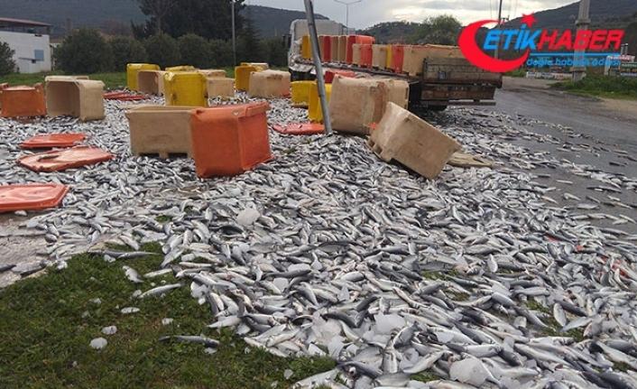 TIR sinyalizasyon direğine çarptı, dorsedeki tonlarca balık yola saçıldı