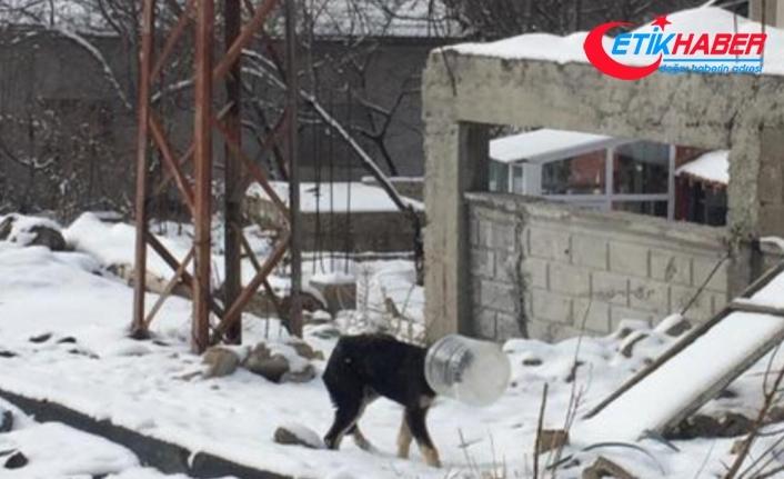 Başı bidona sıkışan yavru köpeği jandarma kurtardı